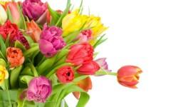 kwiaty-bukiet-tulipany